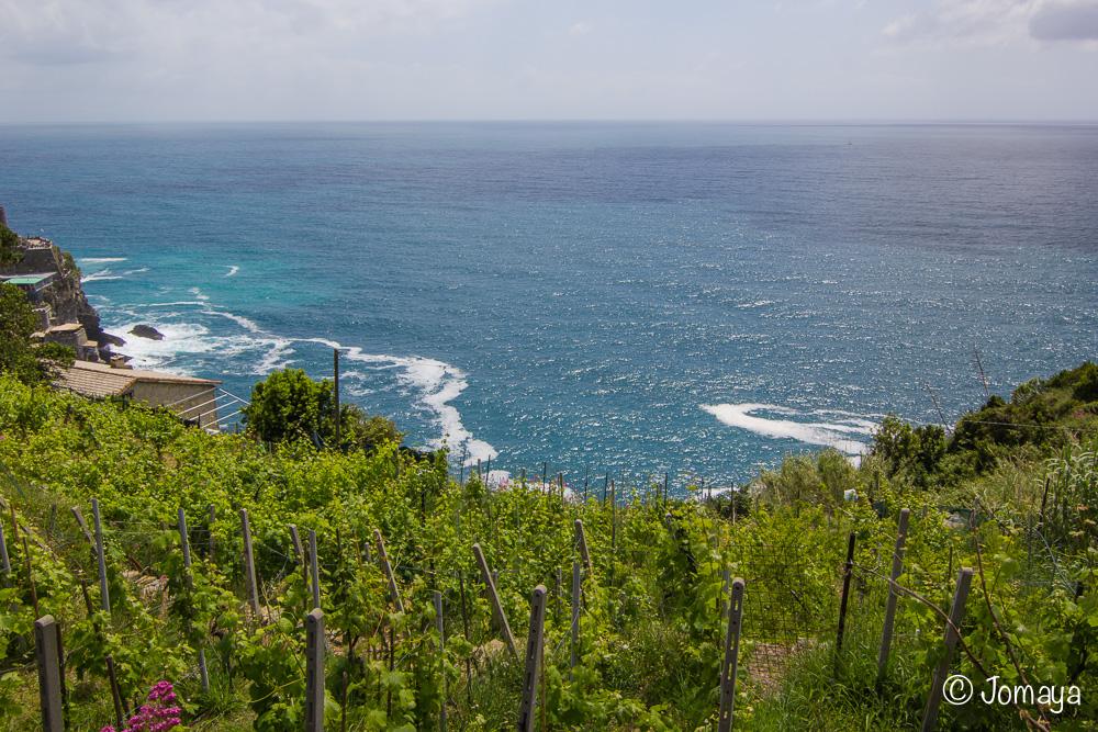 Entre Vernazza & Monterosse - Cinque Terre - Ligurie - Italia