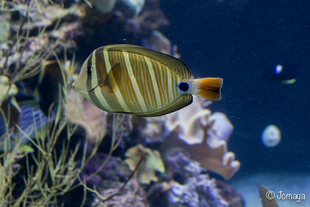 Aquarium - Nouméa - Nouvelle Calédonie