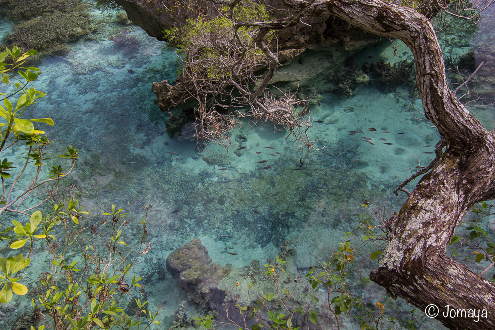 Aquarium naturel - Maré