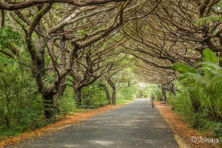 Allée - Ile des Pins - Nouvelle Calédonie